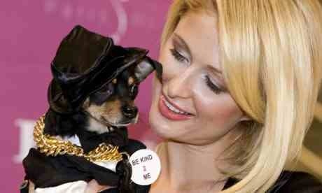 paris hilton with a pet friend